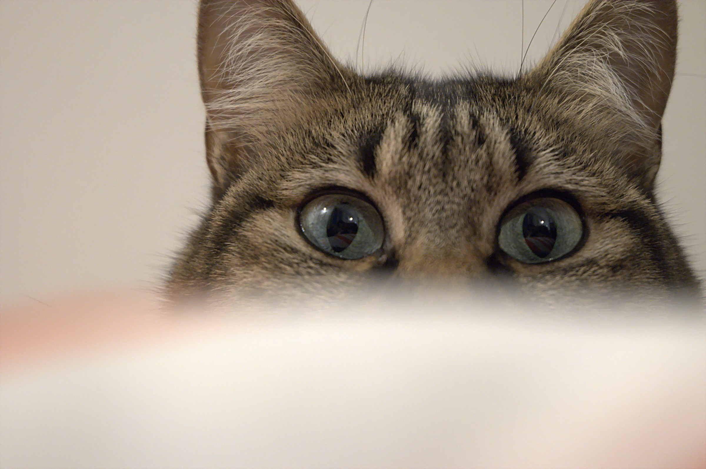 Occhi di gatto...