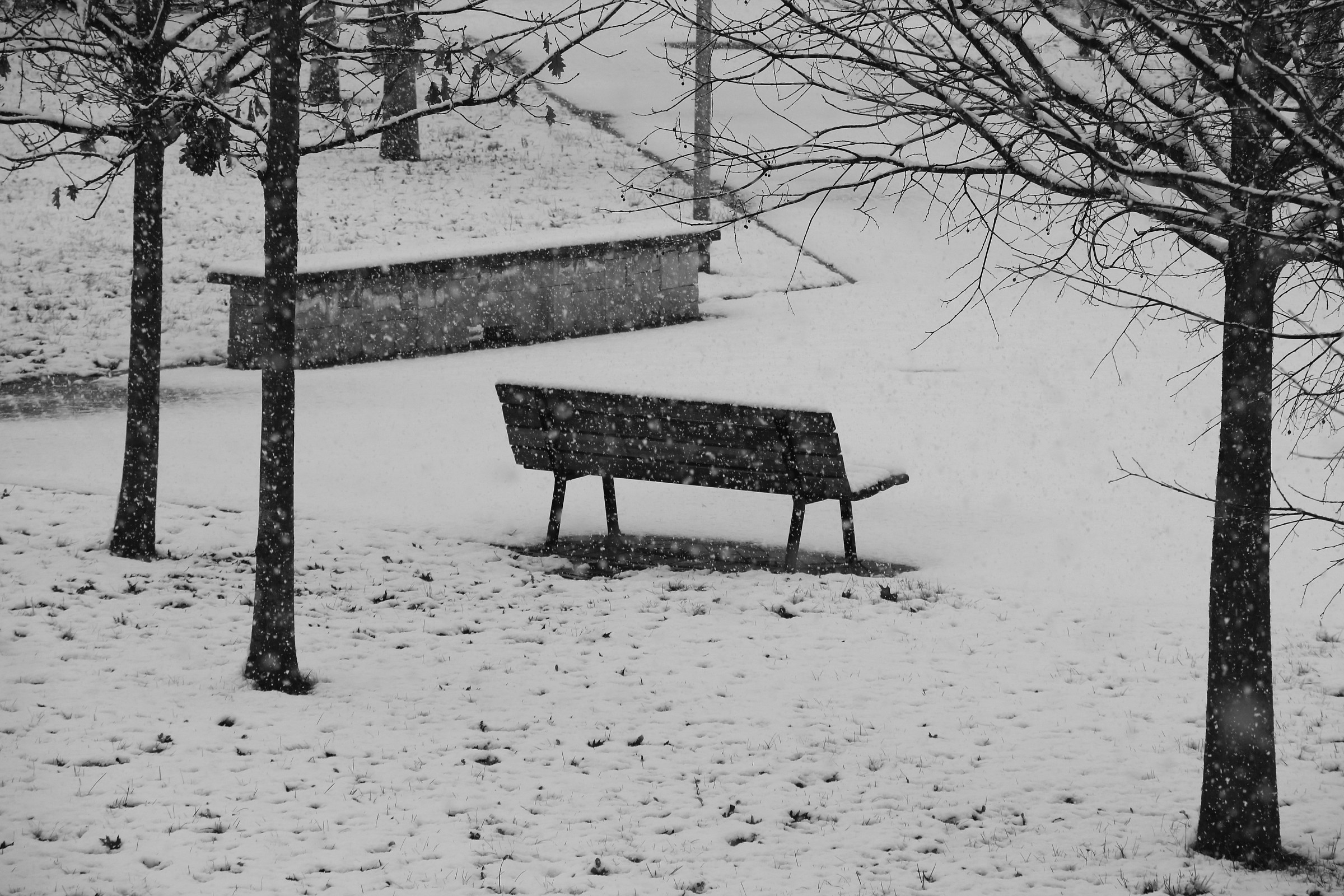 alone in the snow...