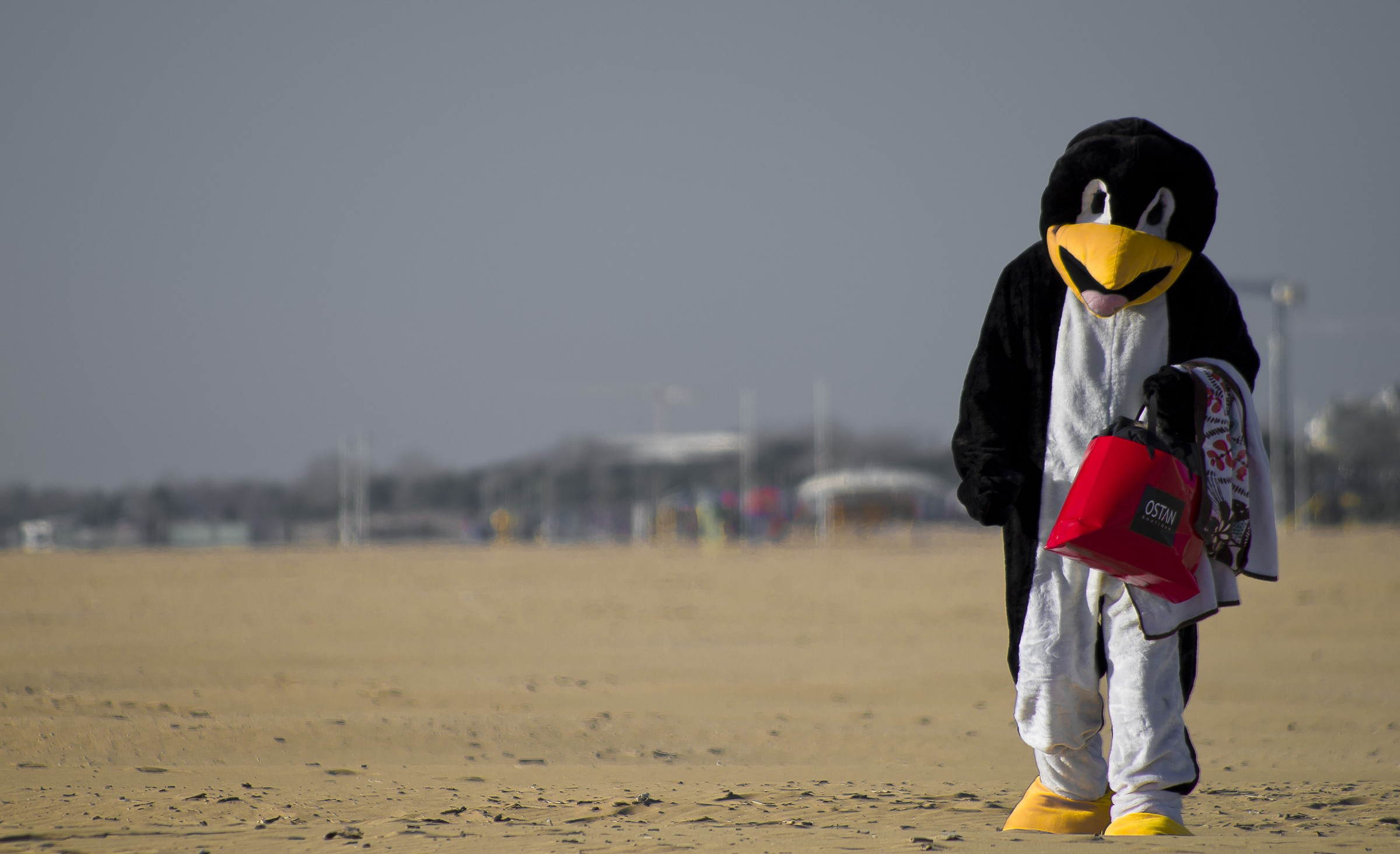 Penguins in Bibione...