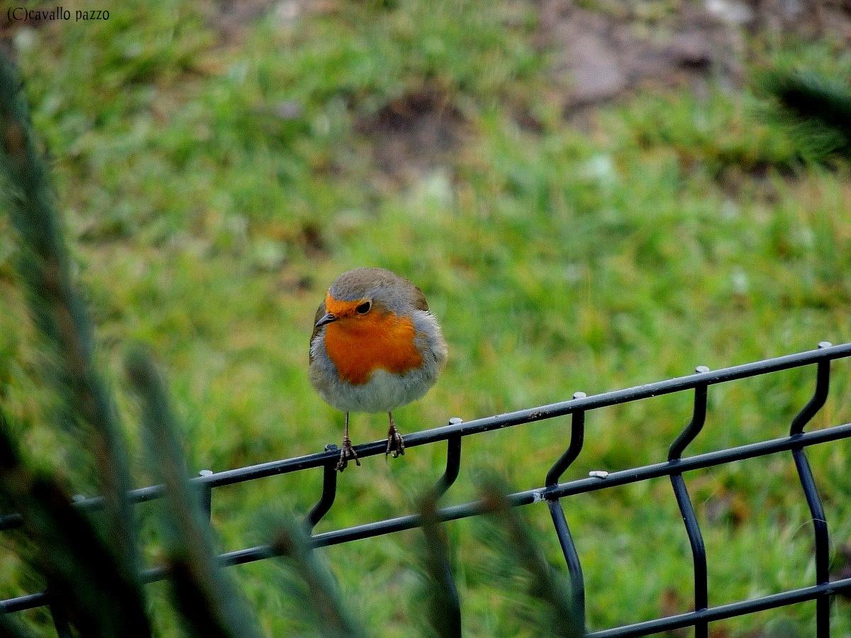 Friend robin...
