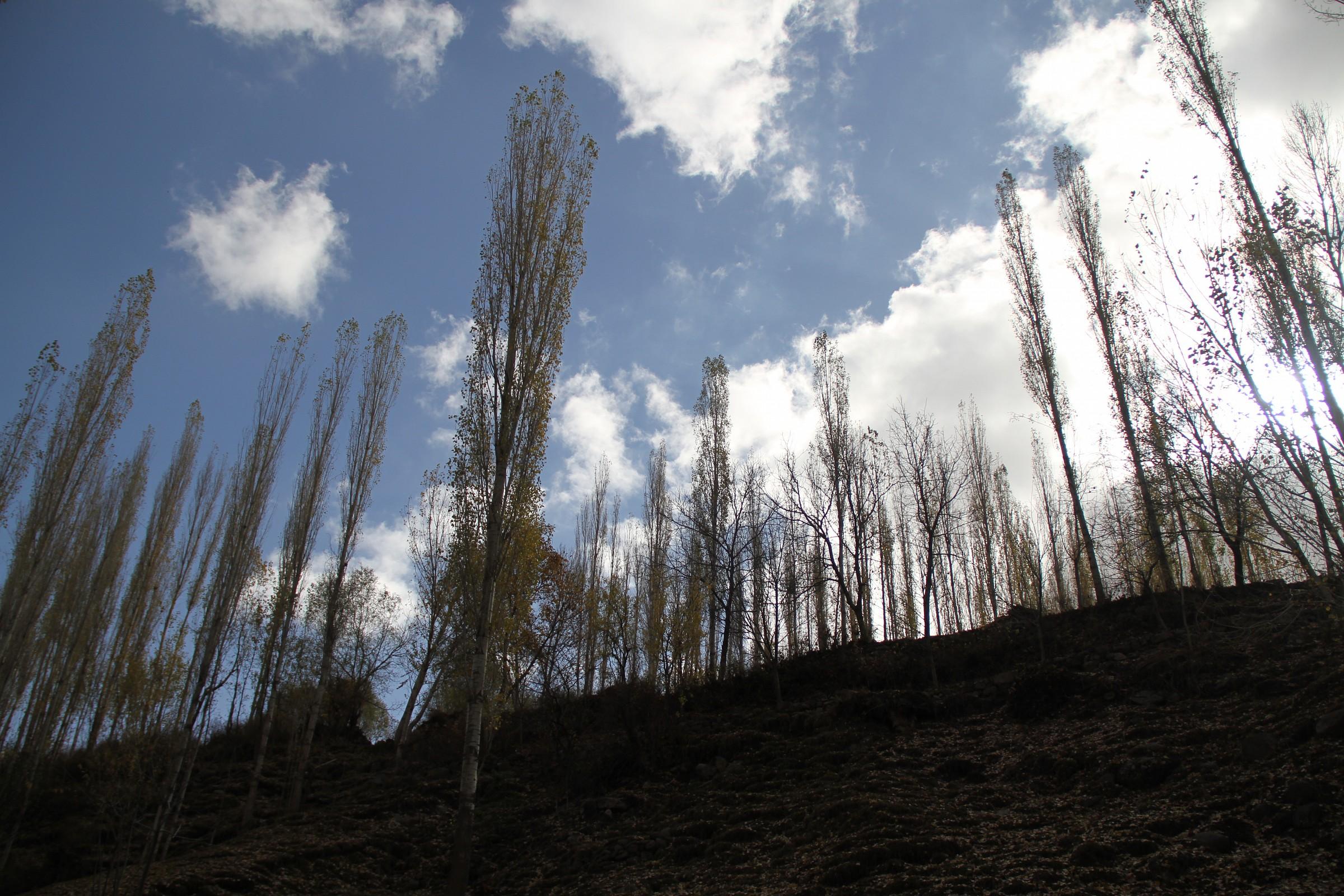 Tabriz Nature...