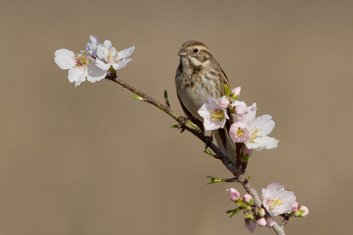Segnali di primavera pagina 2 juzaphoto - Primavera uccelli primavera colorazione pagine ...