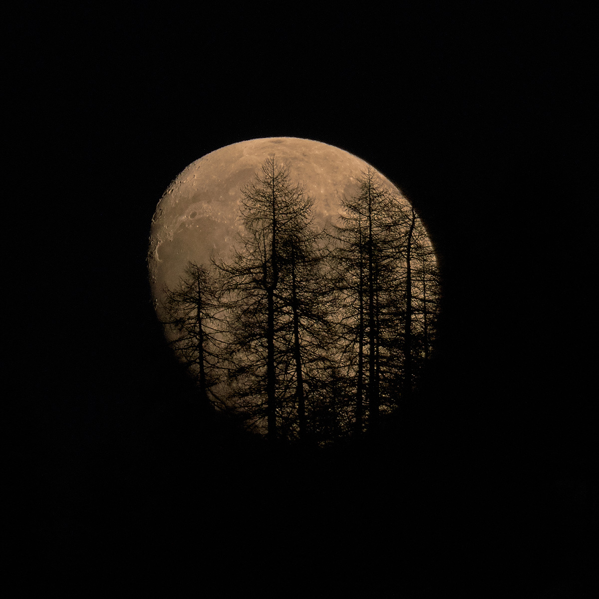 Moon behind trees...