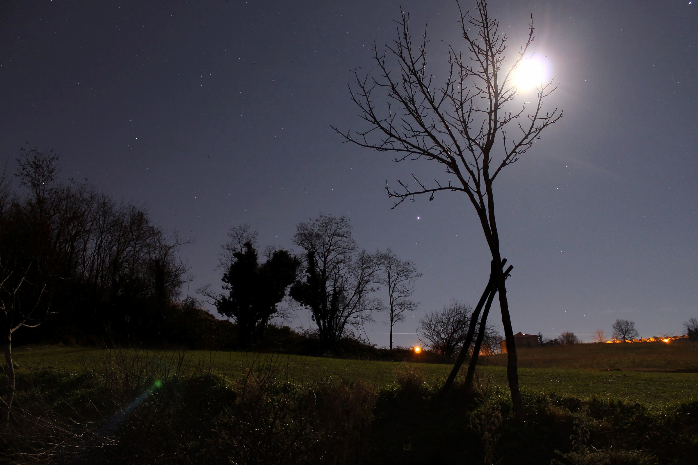 Moon and Jupiter in the branches...