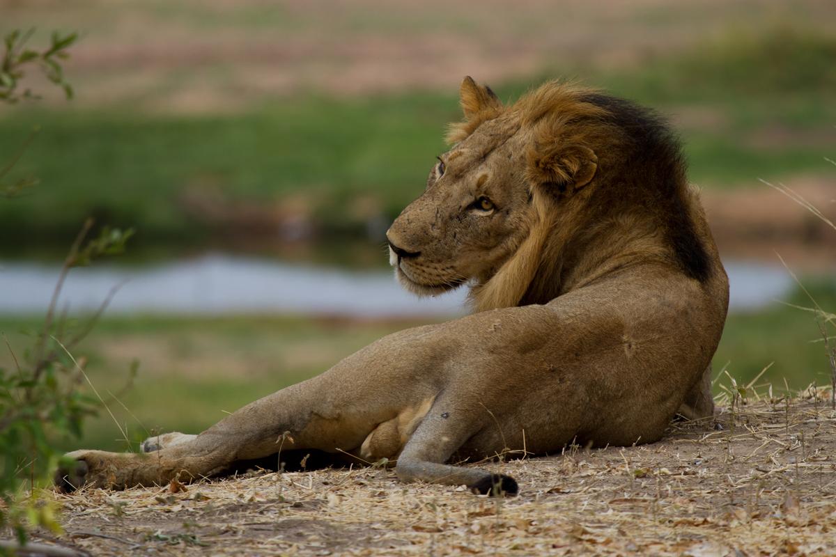 The siesta...