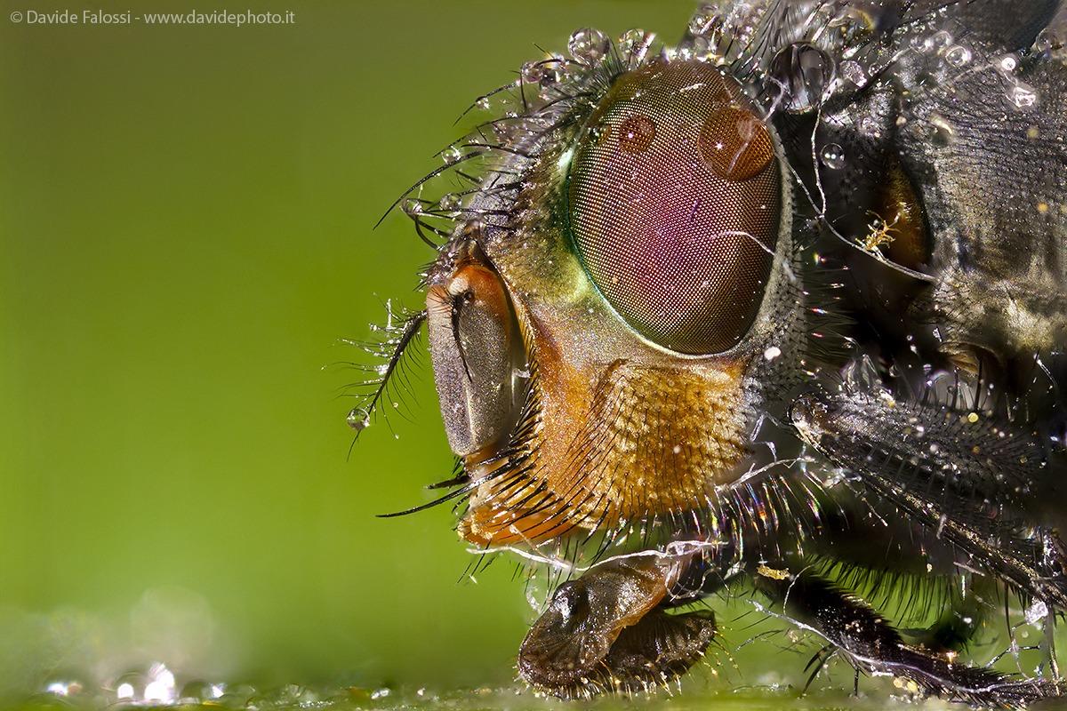 Hello, I'm a fly...