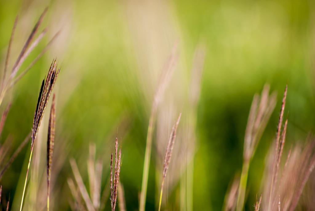 Erba selvatica - Wild Grass...