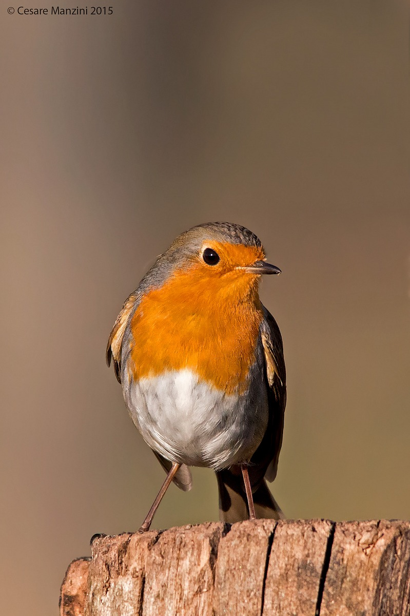The portrait of Robin ......