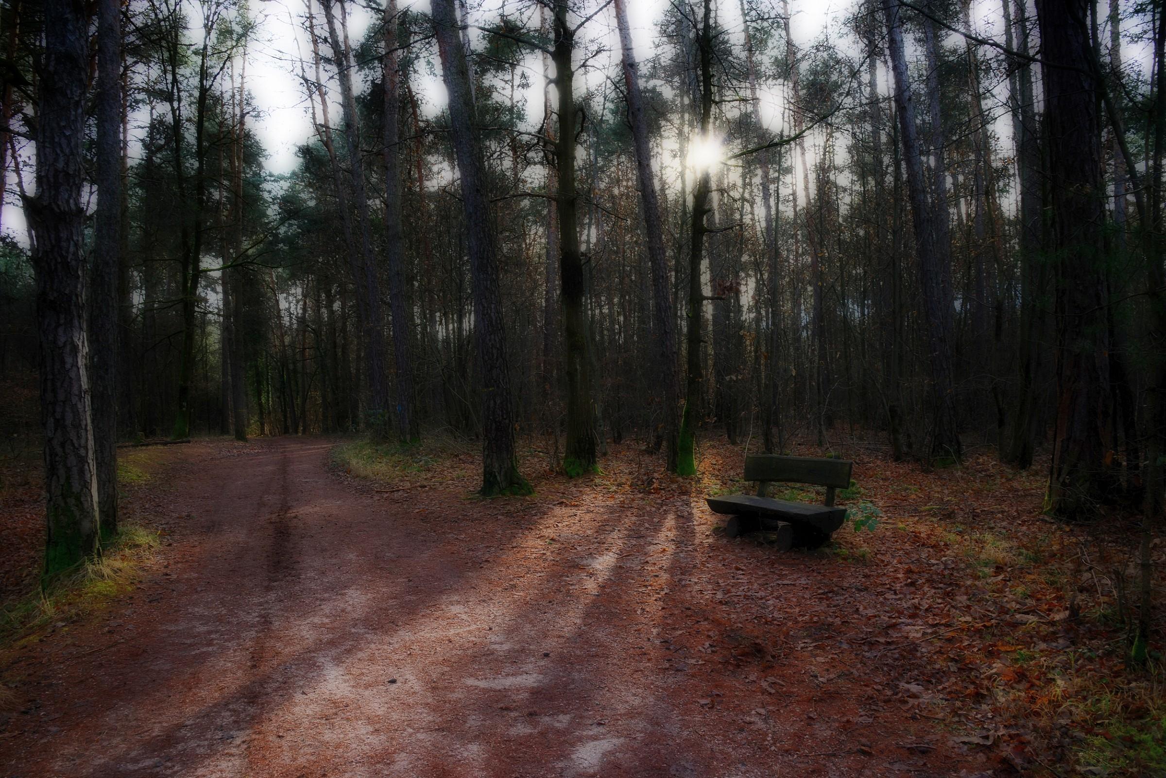 in bosco_1...