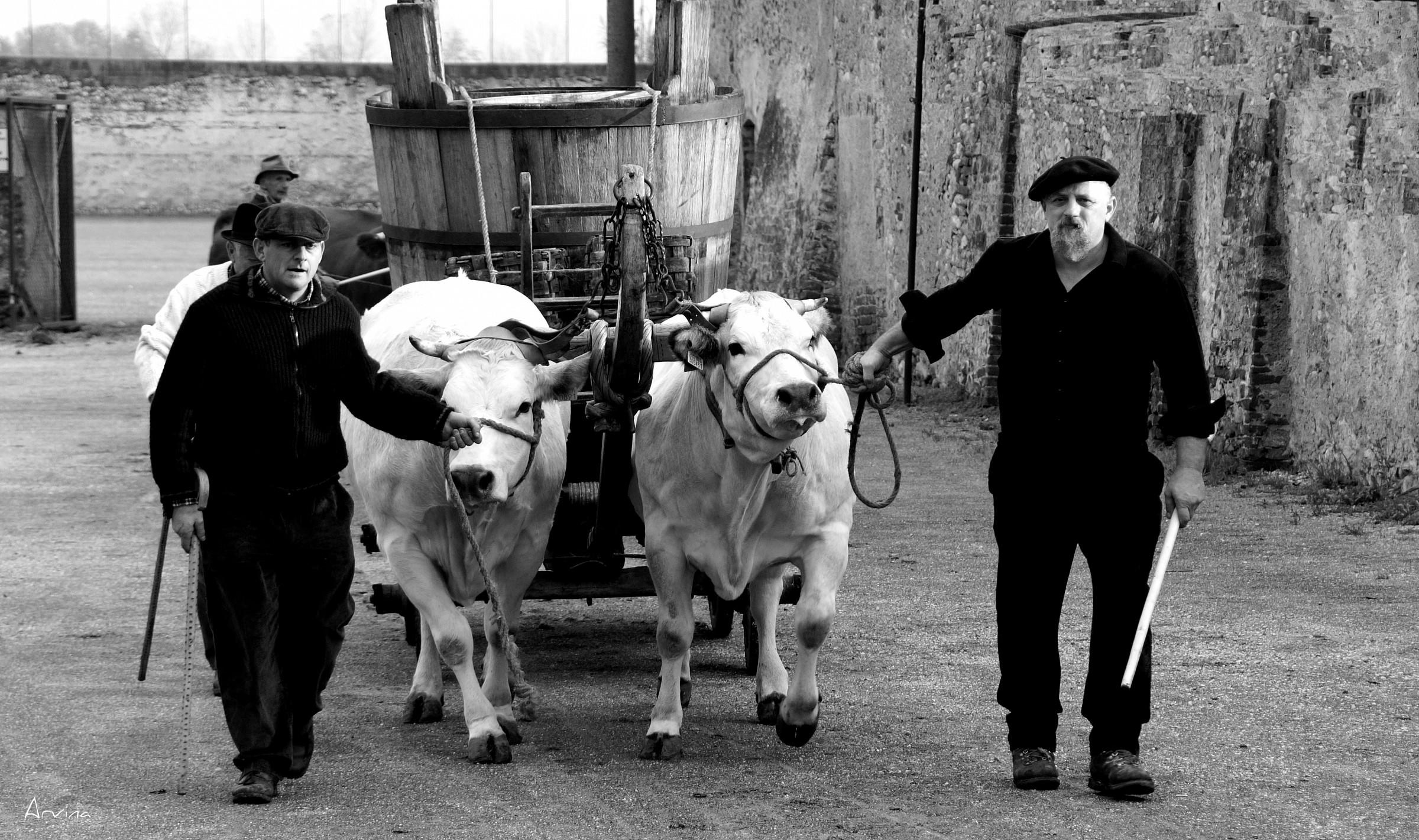 Tractors obsolete...