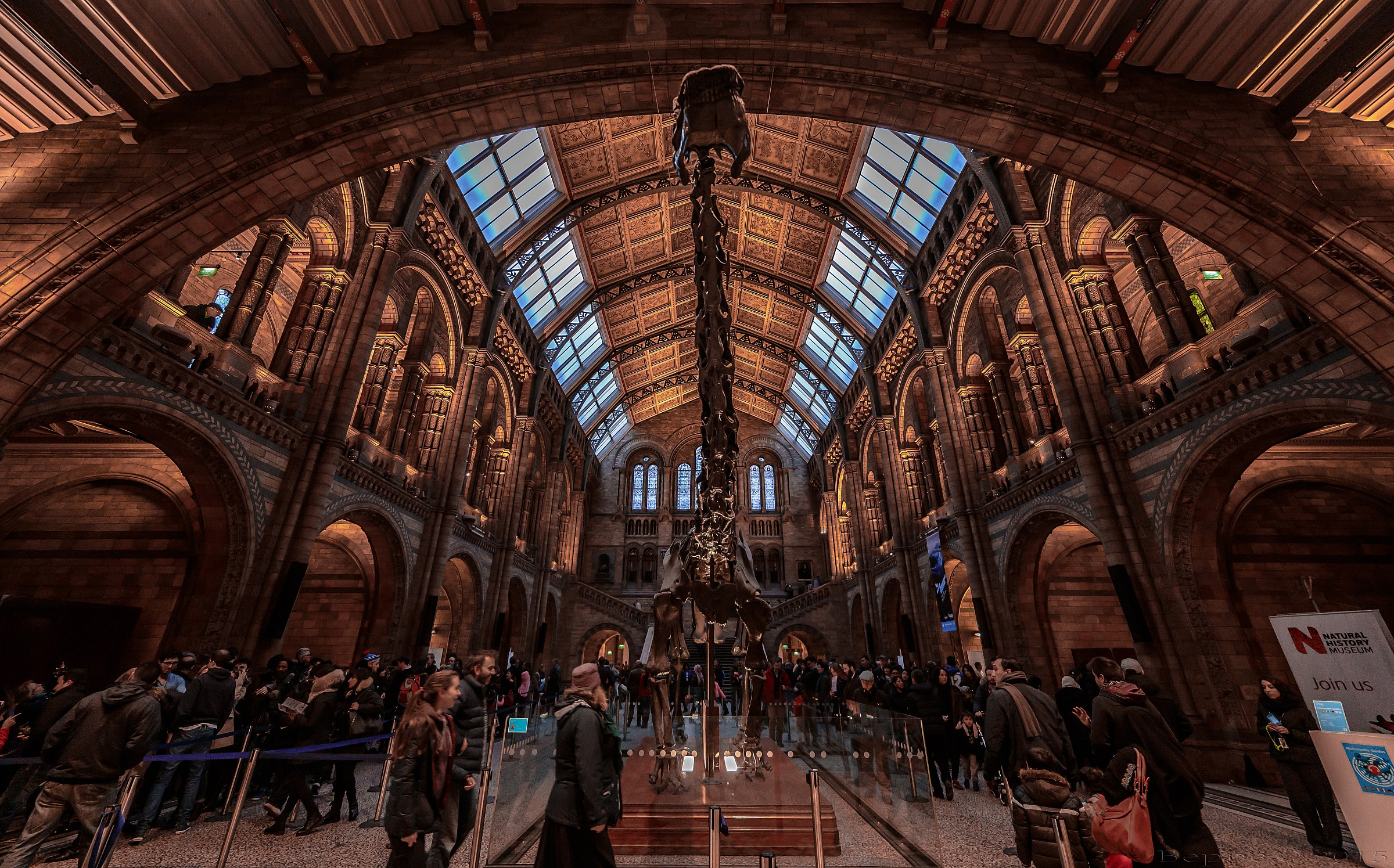Natural History Museum - Brachiosaurus...
