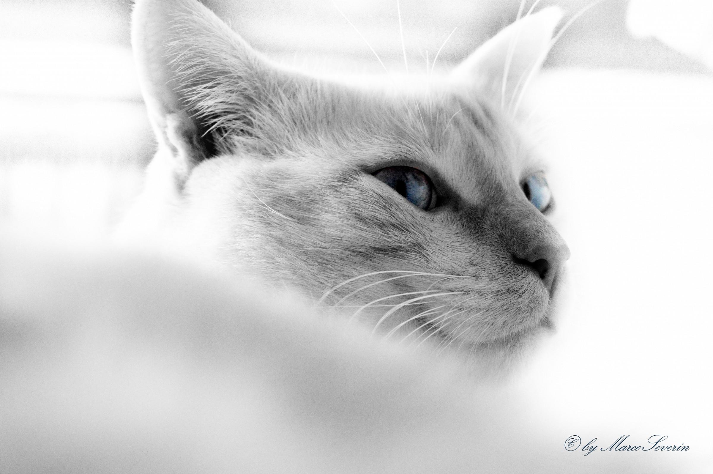 occhi blu...