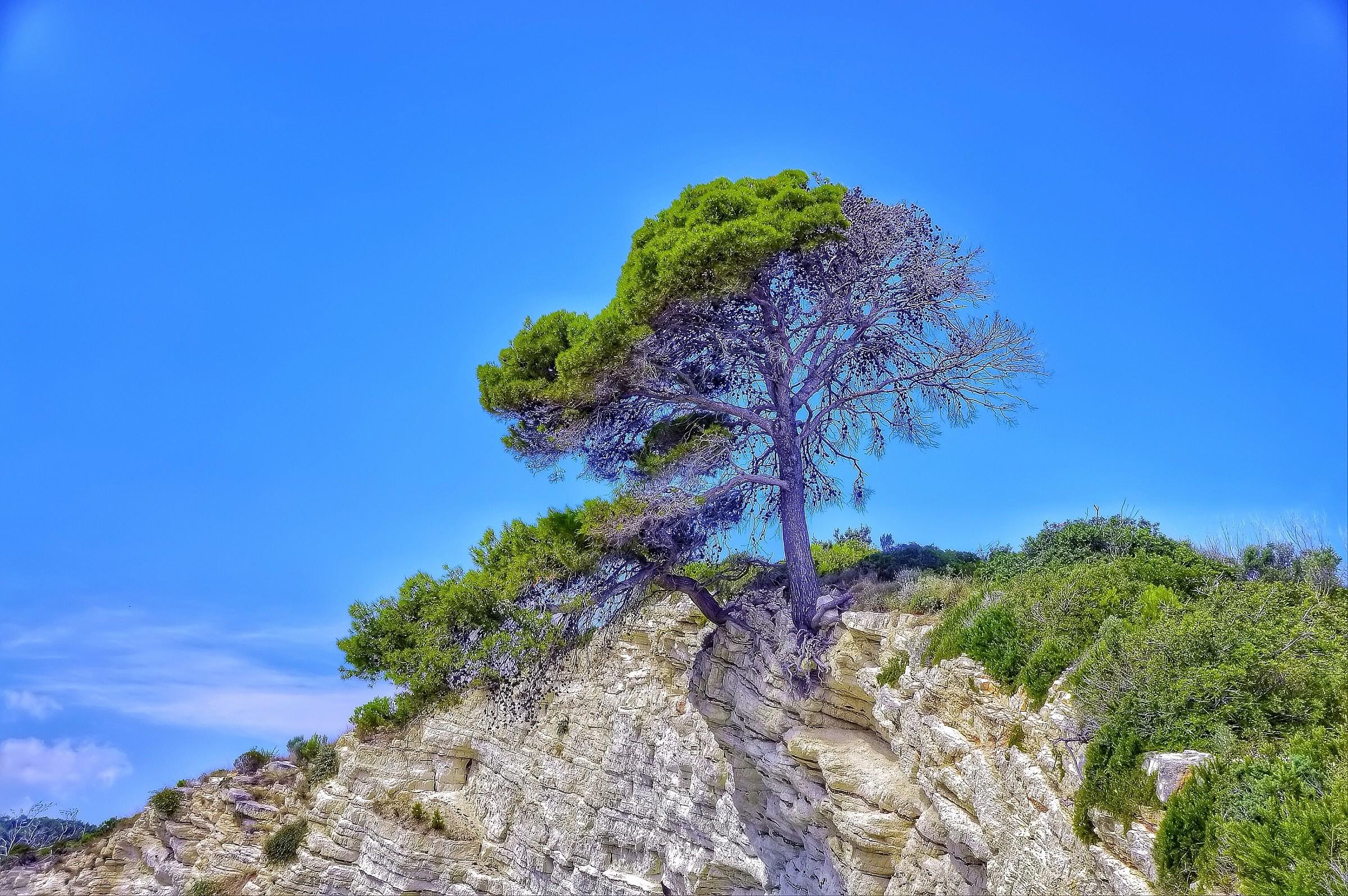 верстаются утвержденной дерево в скале картинки ремонты-самоделки многие другие