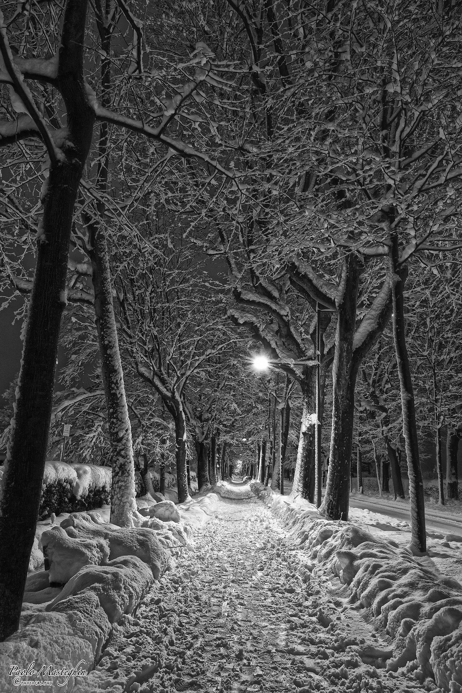 The winter in the avenue .........