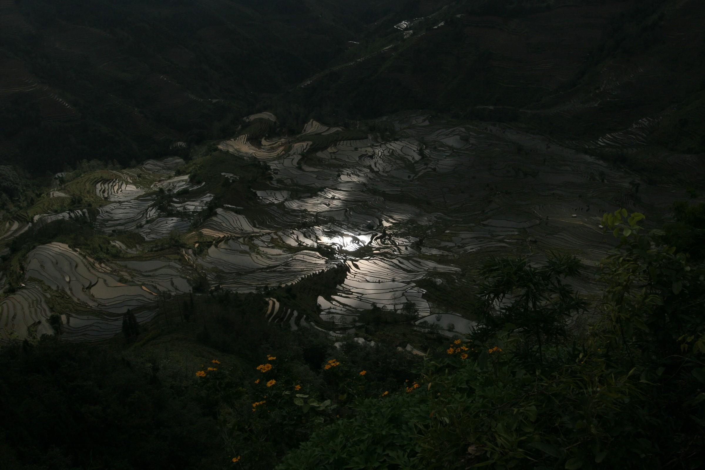 Yuanyang rice paddies - China...
