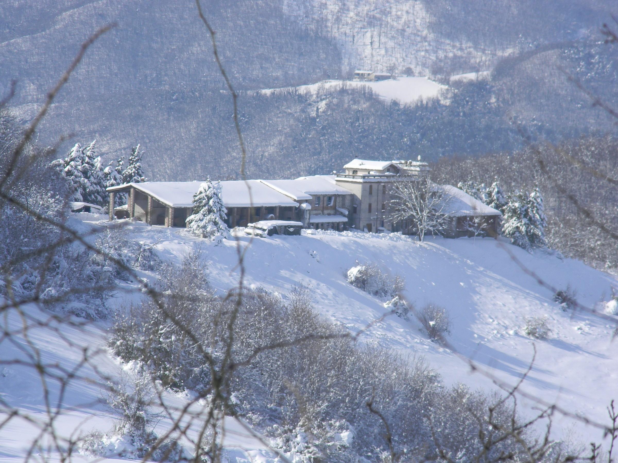 casanova snowy...