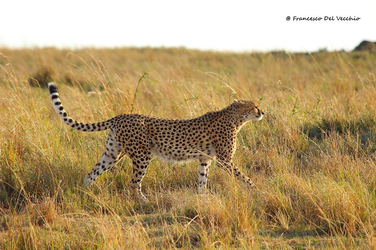 Malaika, Queen of the Masai Mara...