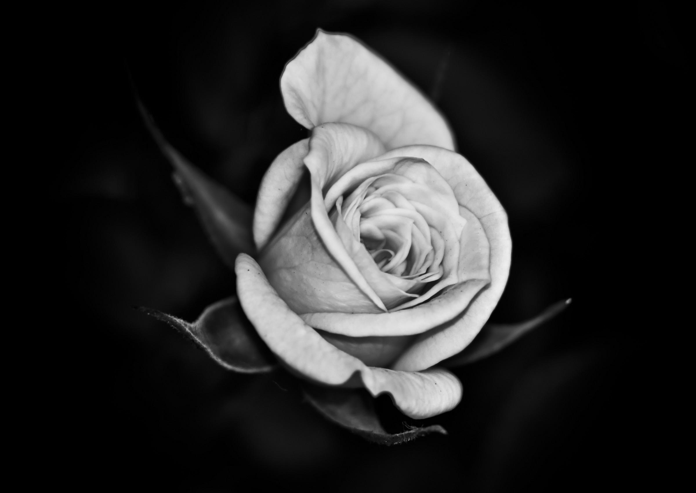 Rose Garden (Oleggio 2011)...