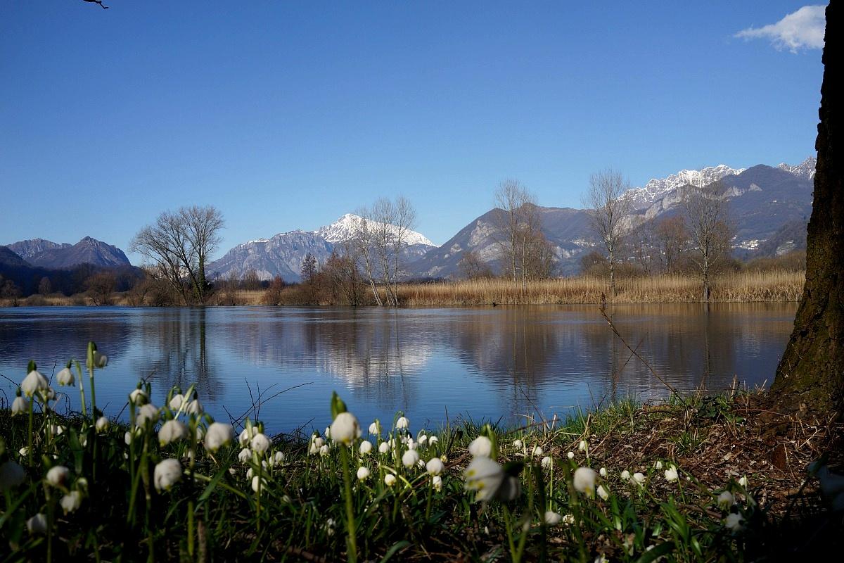 Campanellini di primavera lungo le rive del fiume...