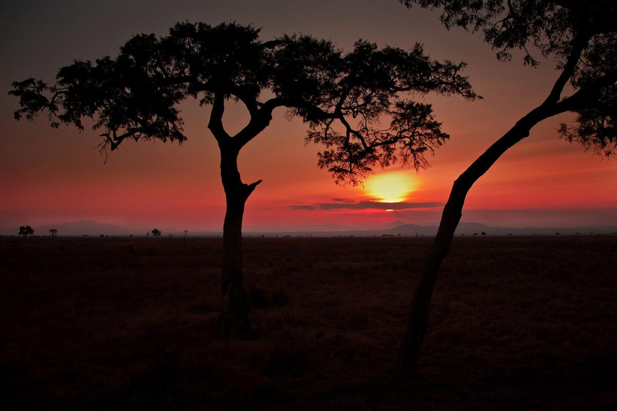 Sunset in the savannah...