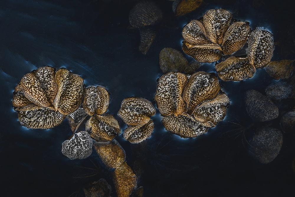Ice flowers...
