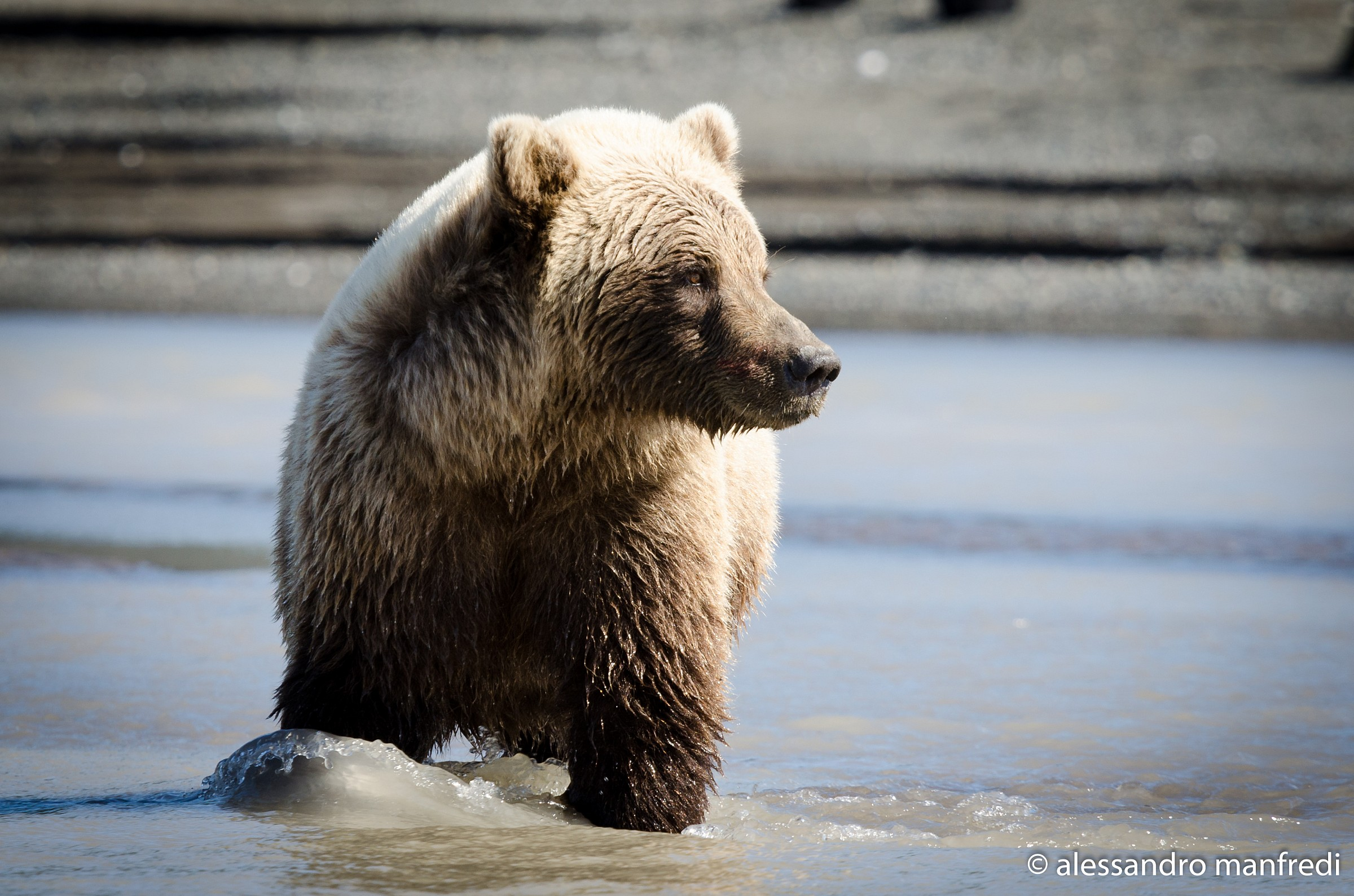 My first bear...