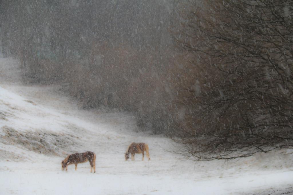Snows ......