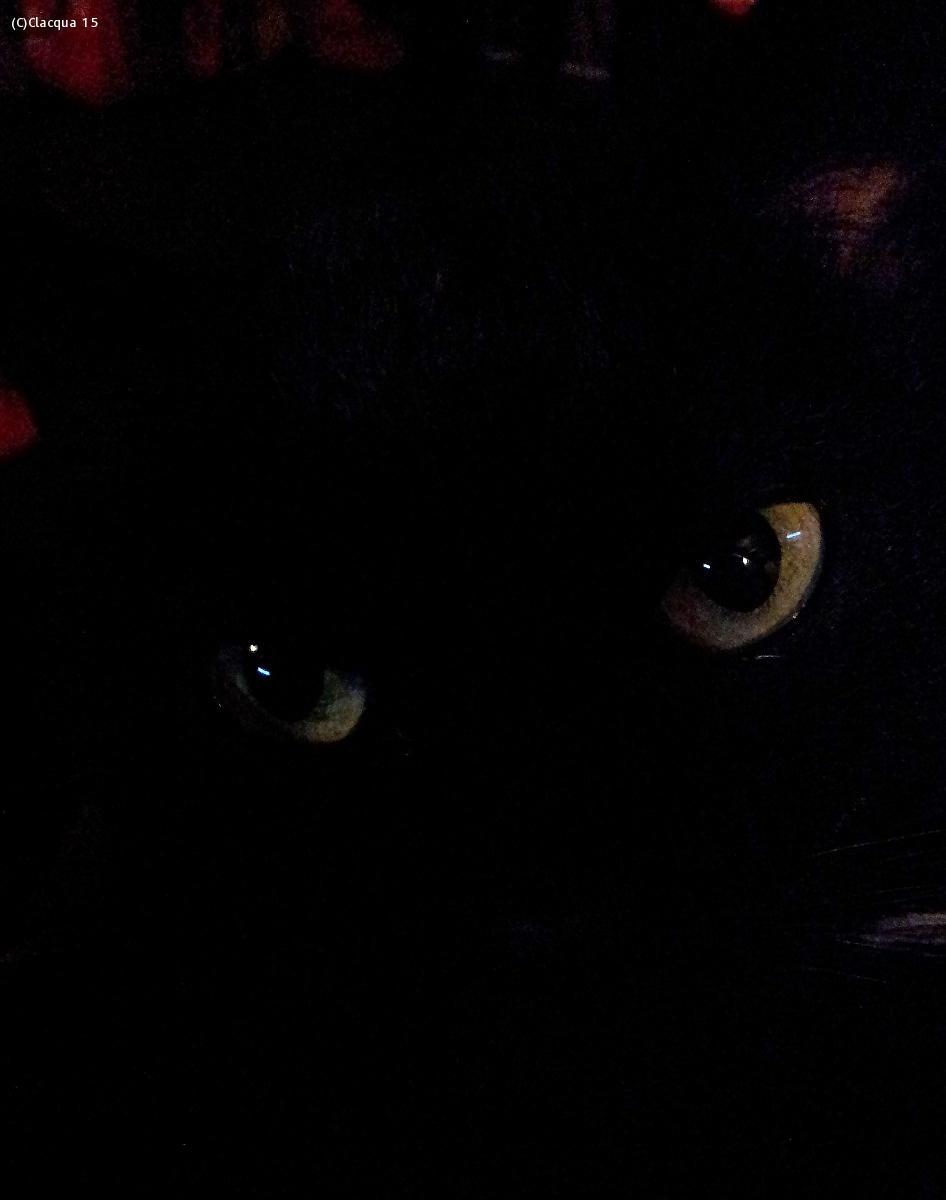 Ugolino: The dark side of the cat....