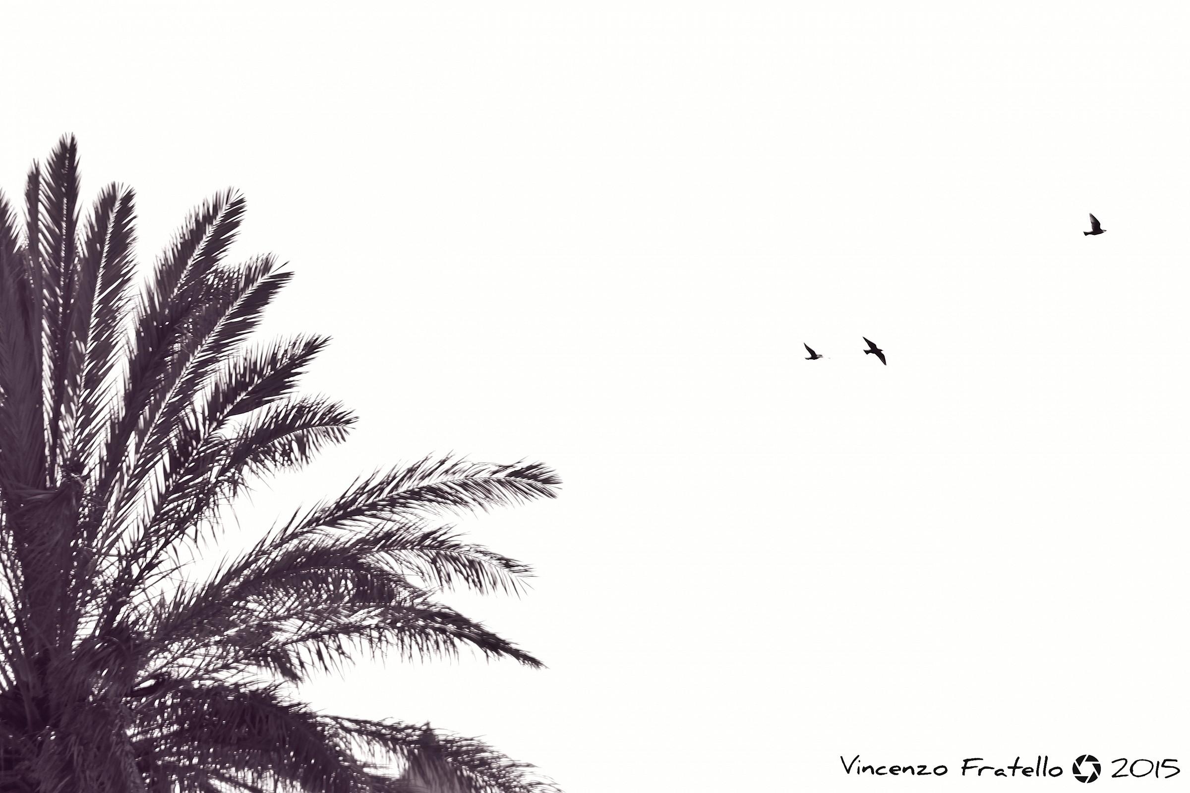 Libertà....
