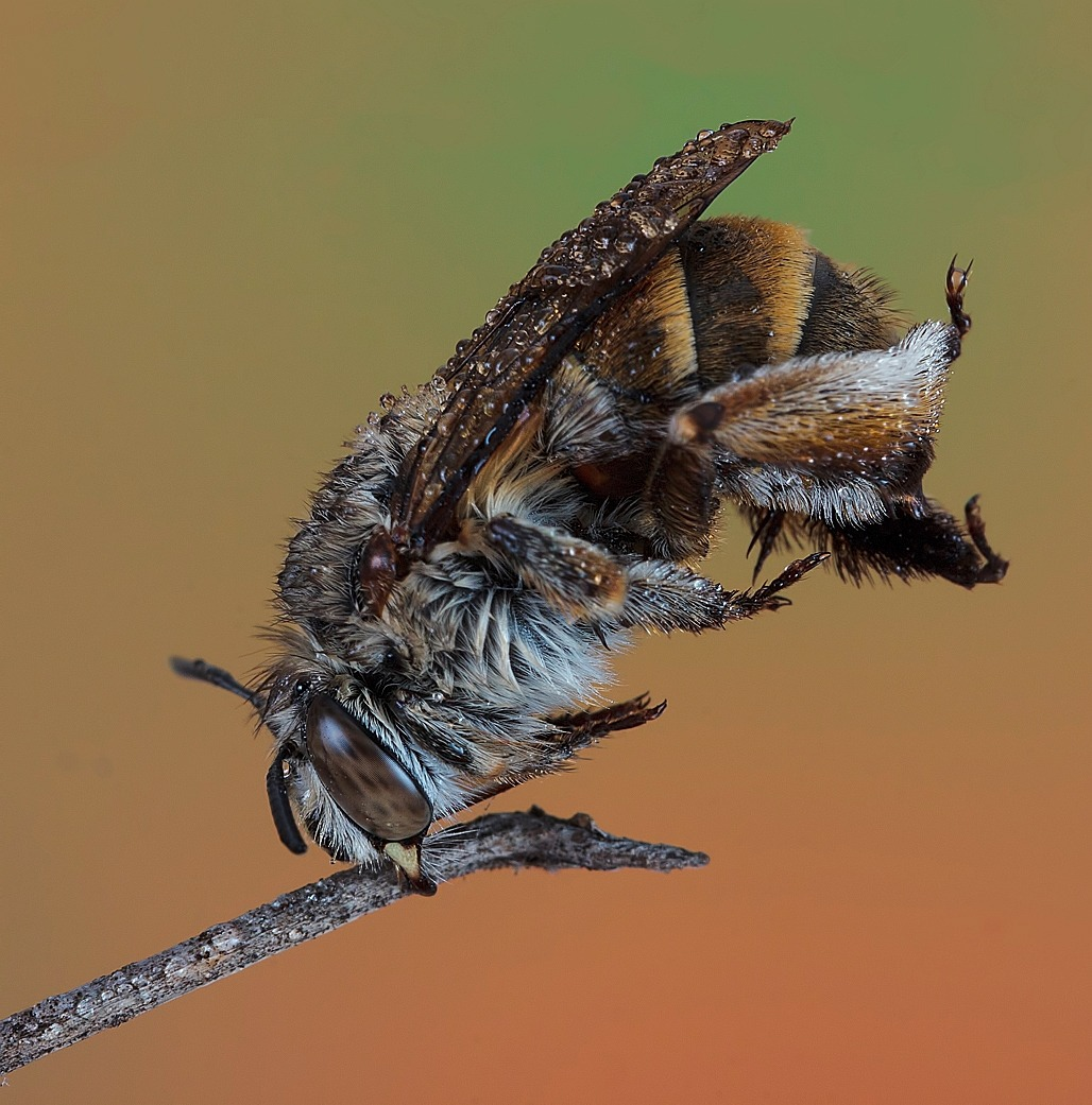 Bee head stand...