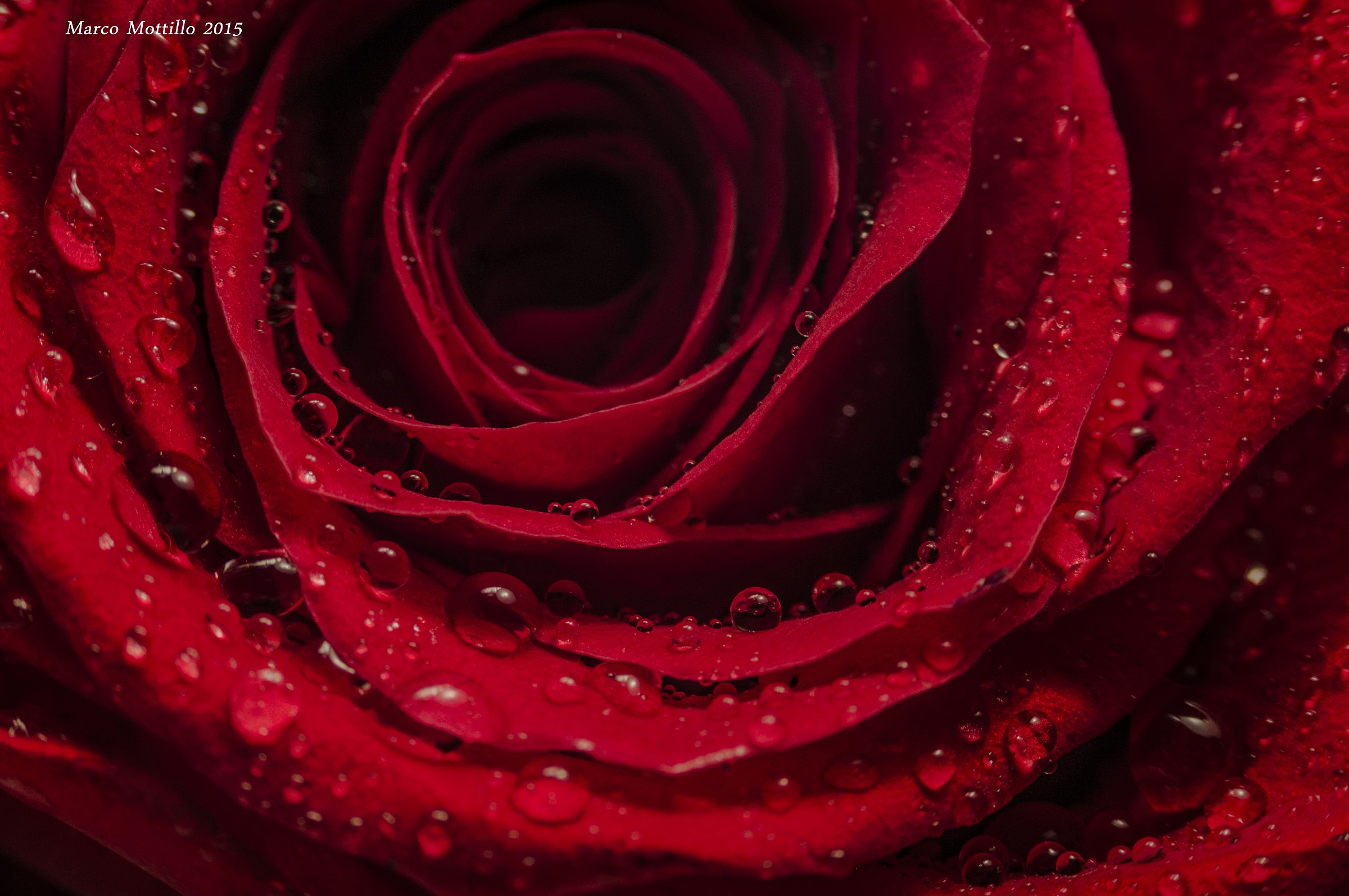 Red Passion...