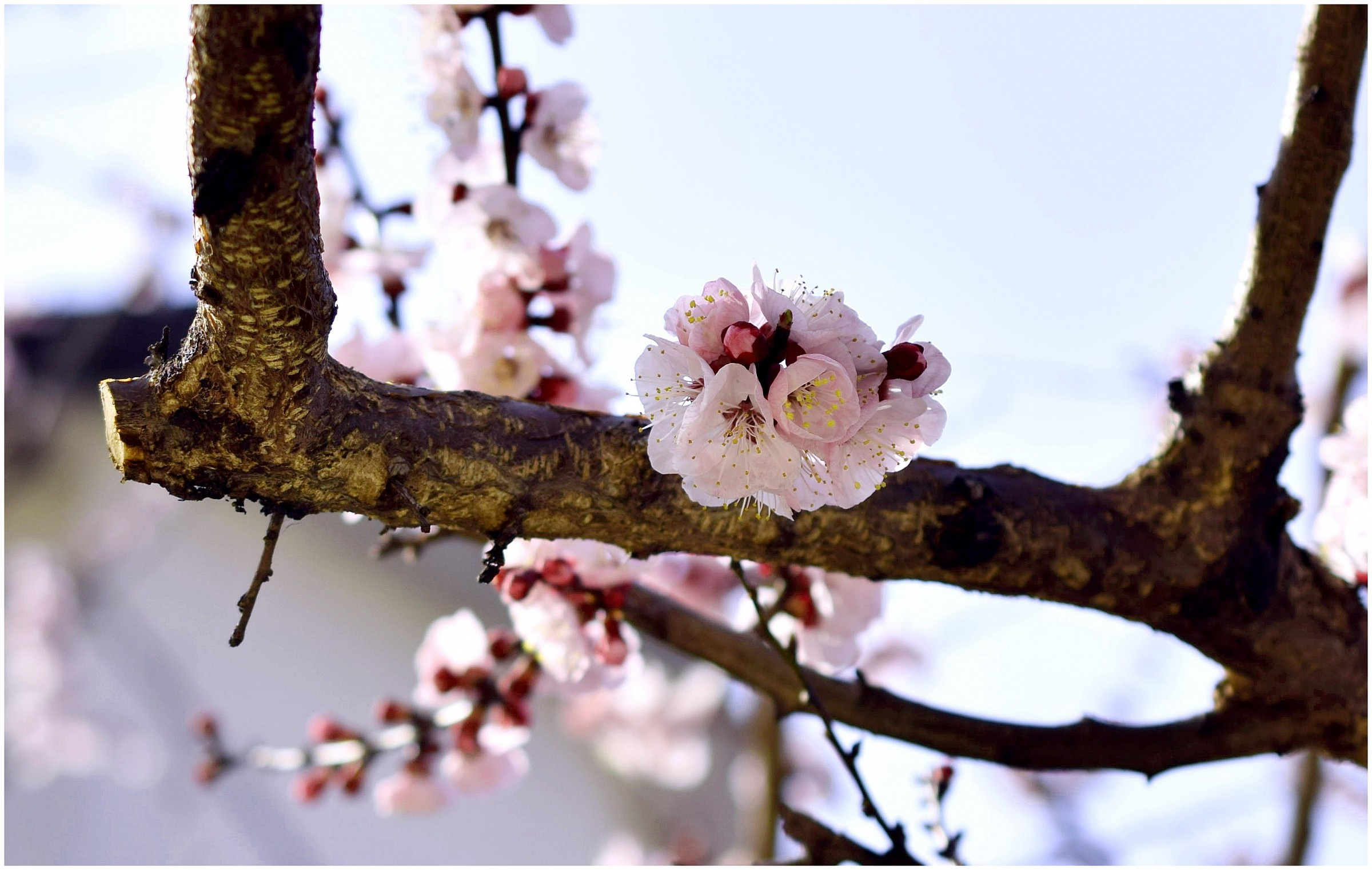 Spring...
