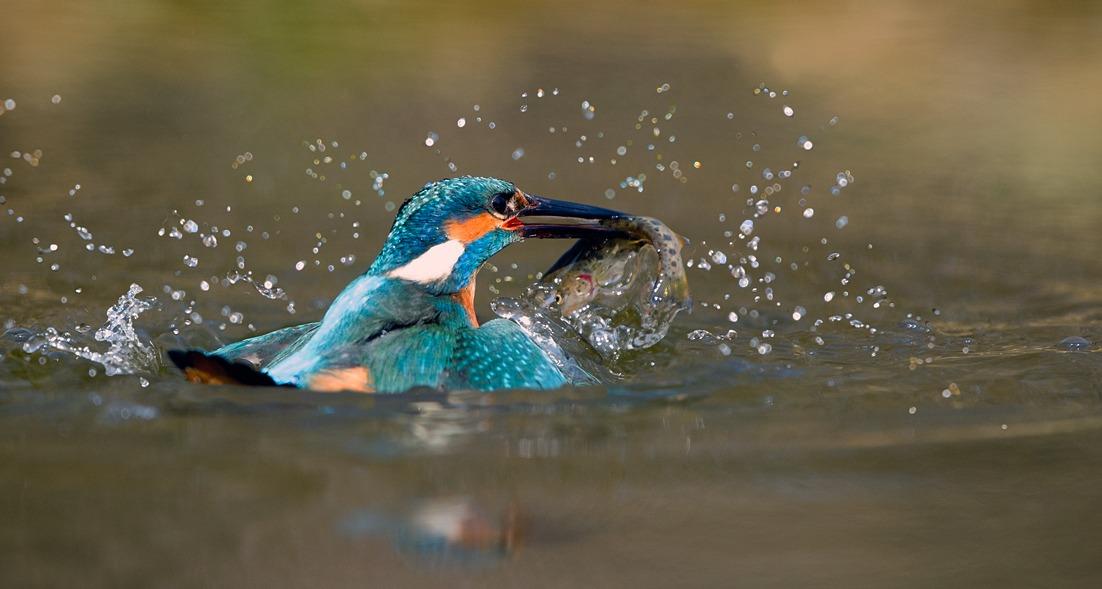 In fishing...