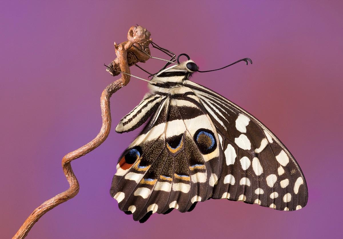 Butterfly 4...