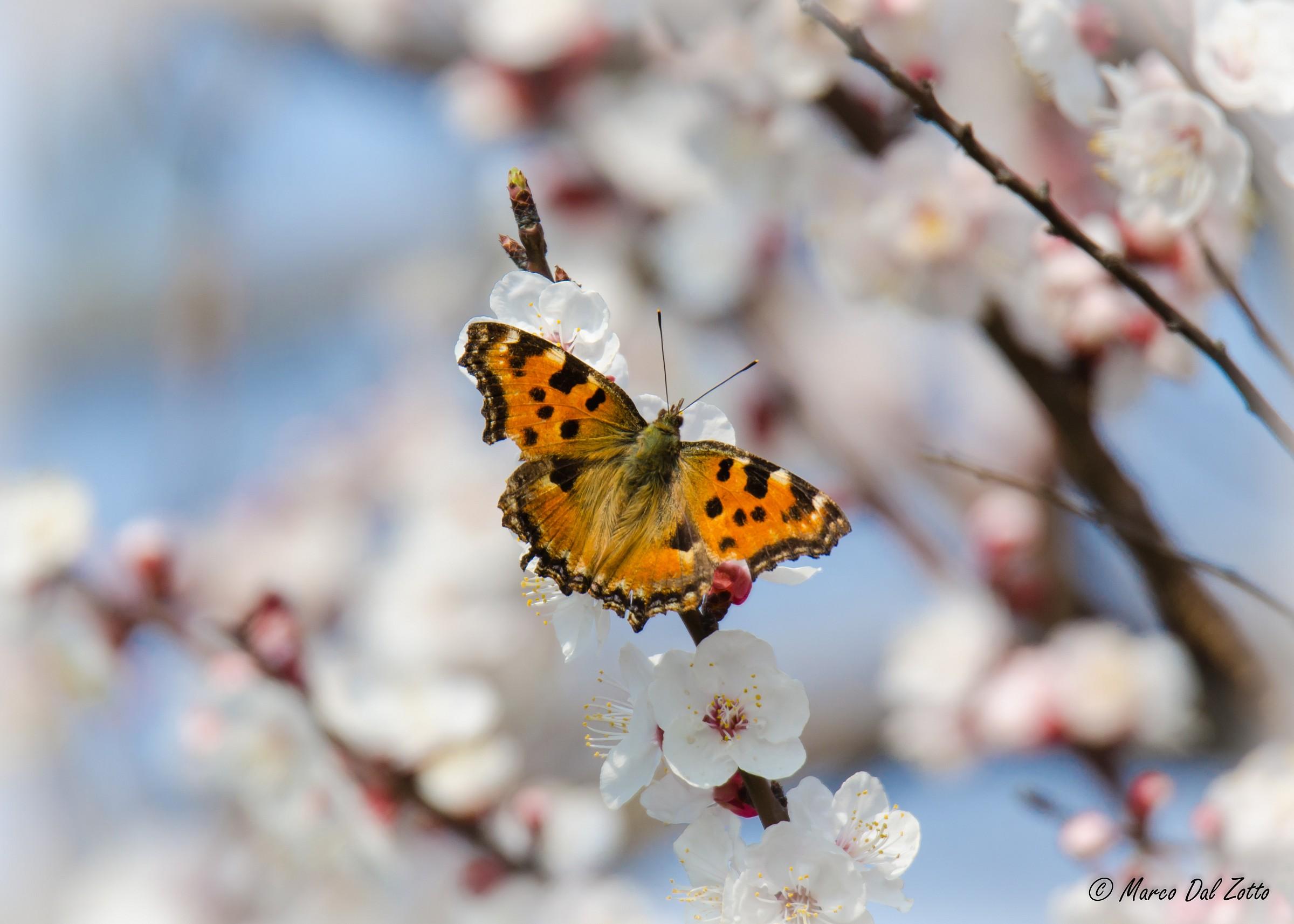 Spring is indisputably...