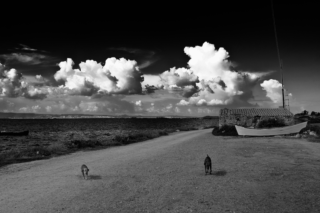 The dogs, Sardegna 2014...