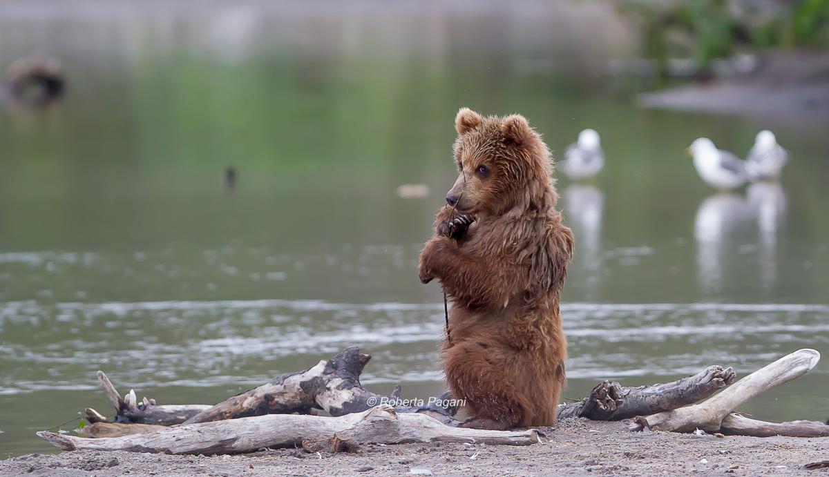 L'orsetto...