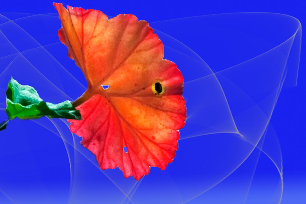 fogliia geranium...
