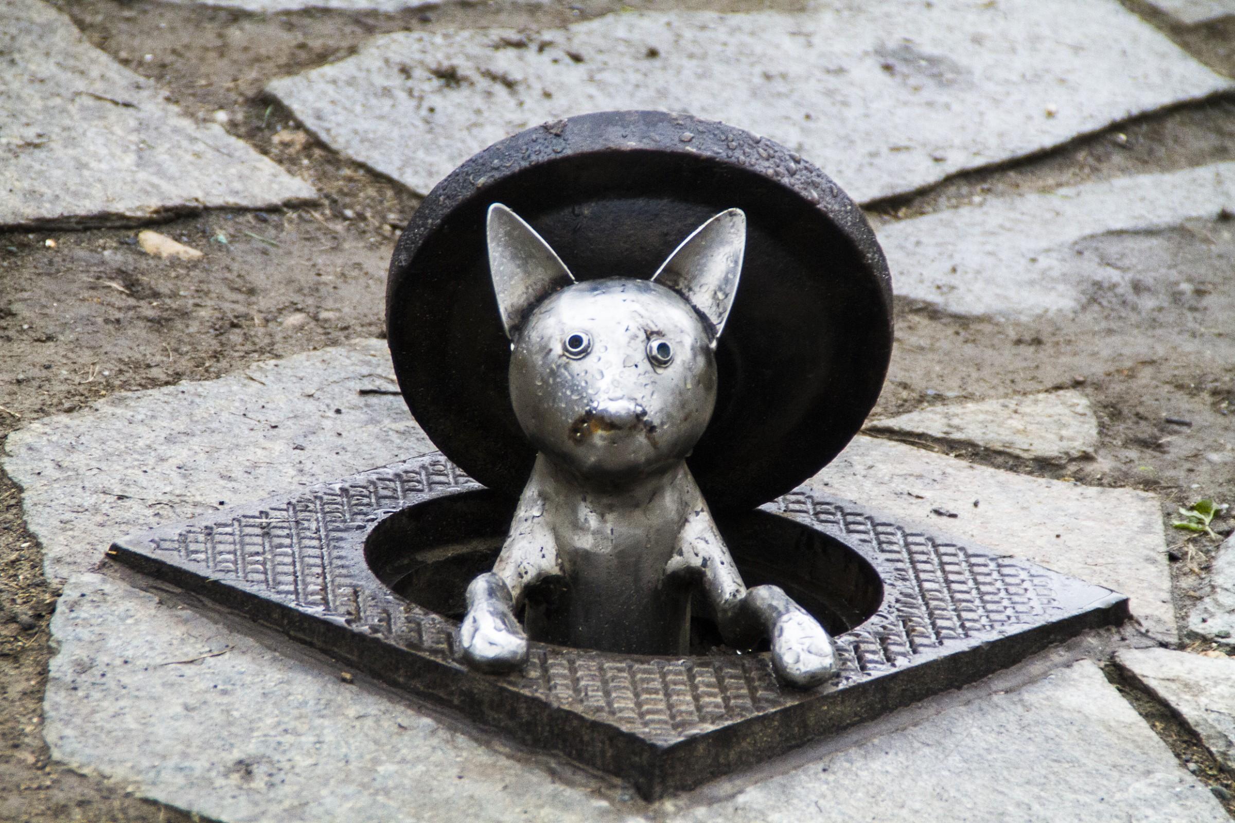 Un Gatto...