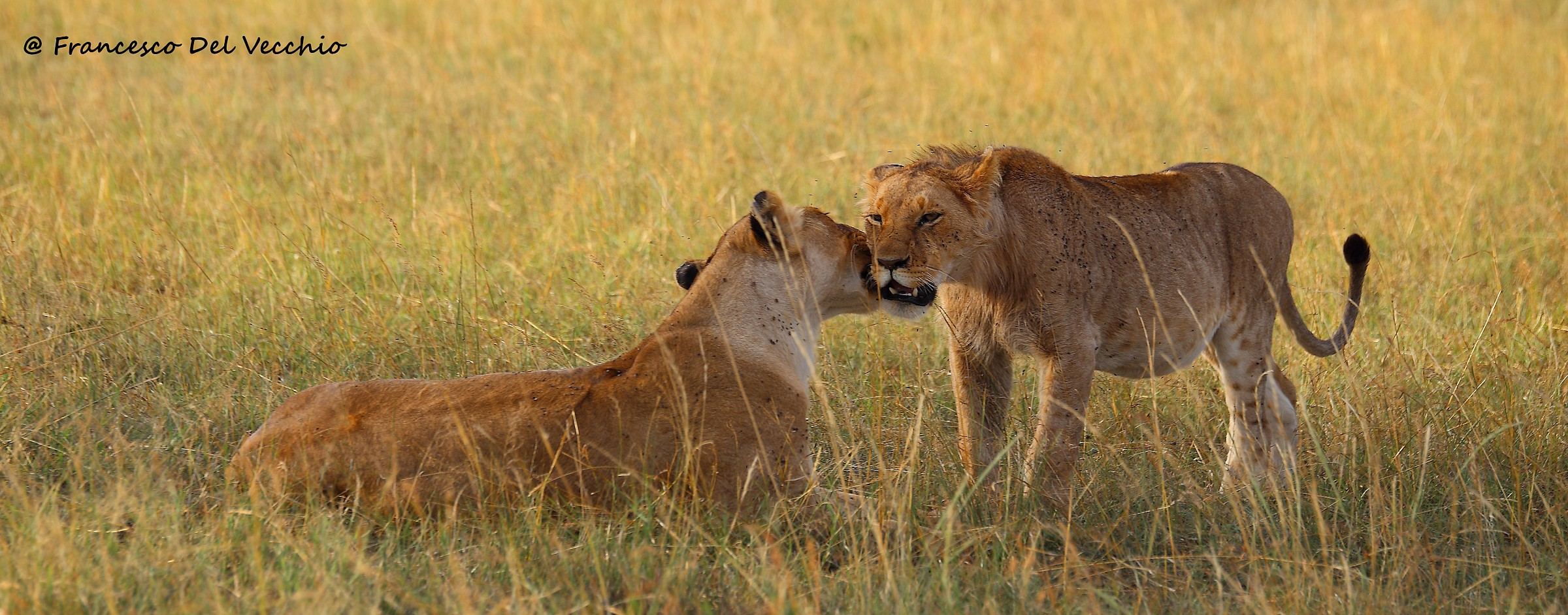 Rongai Pride mama with young boy, son of Notches...