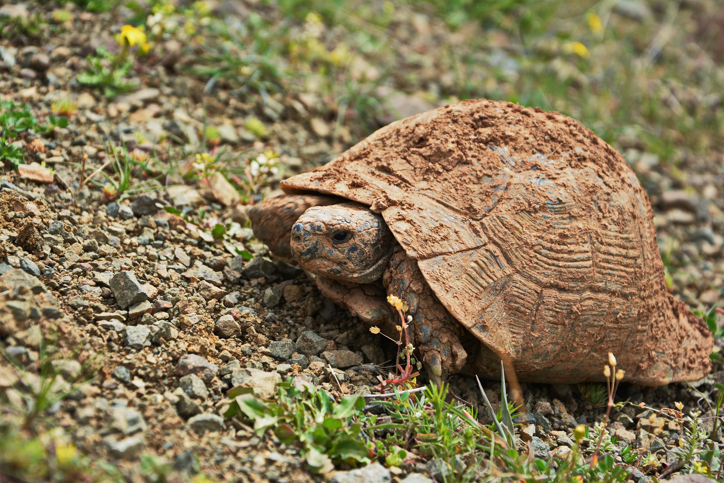 Muddy Turtle...