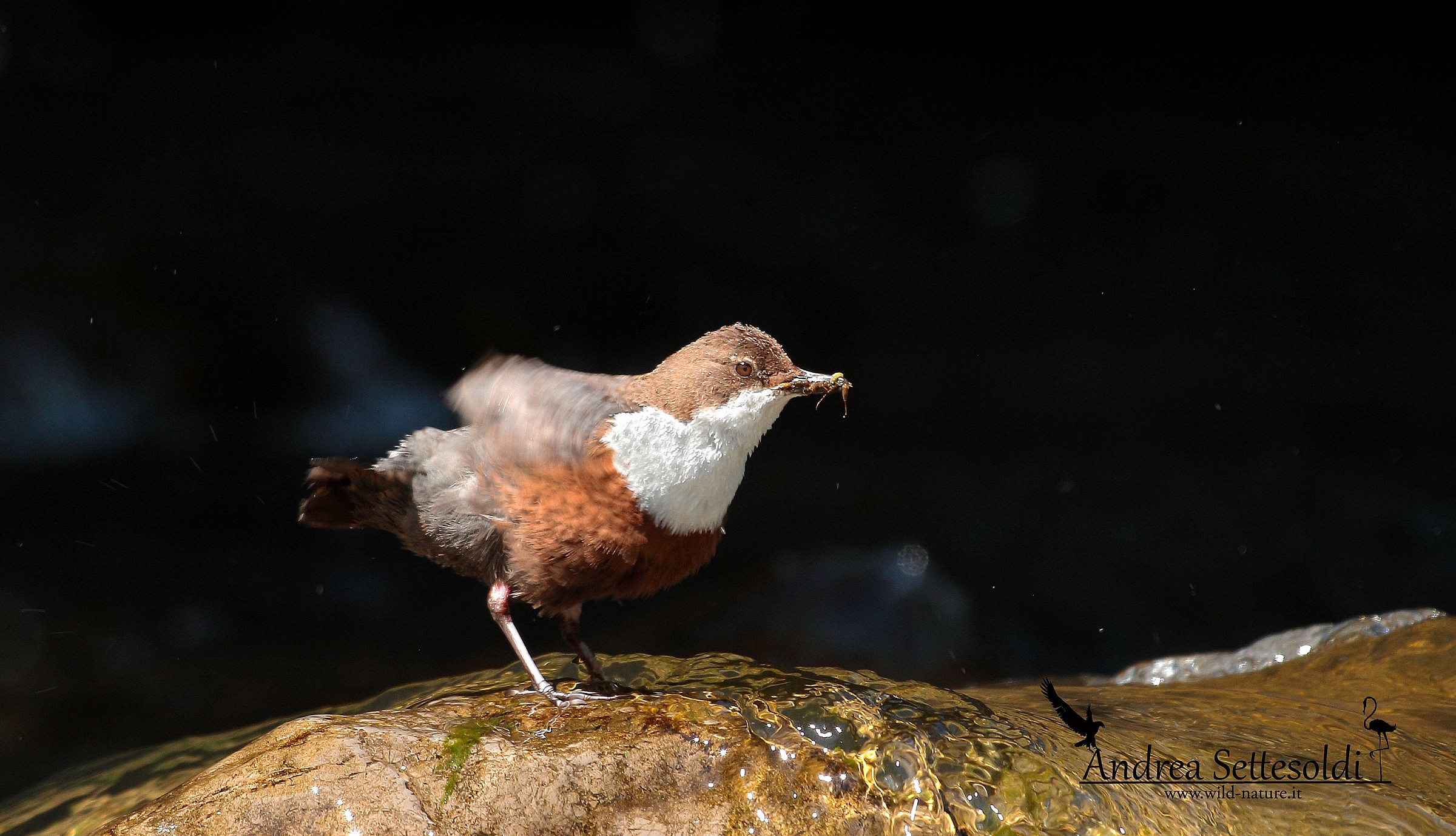 Dipper with cue...
