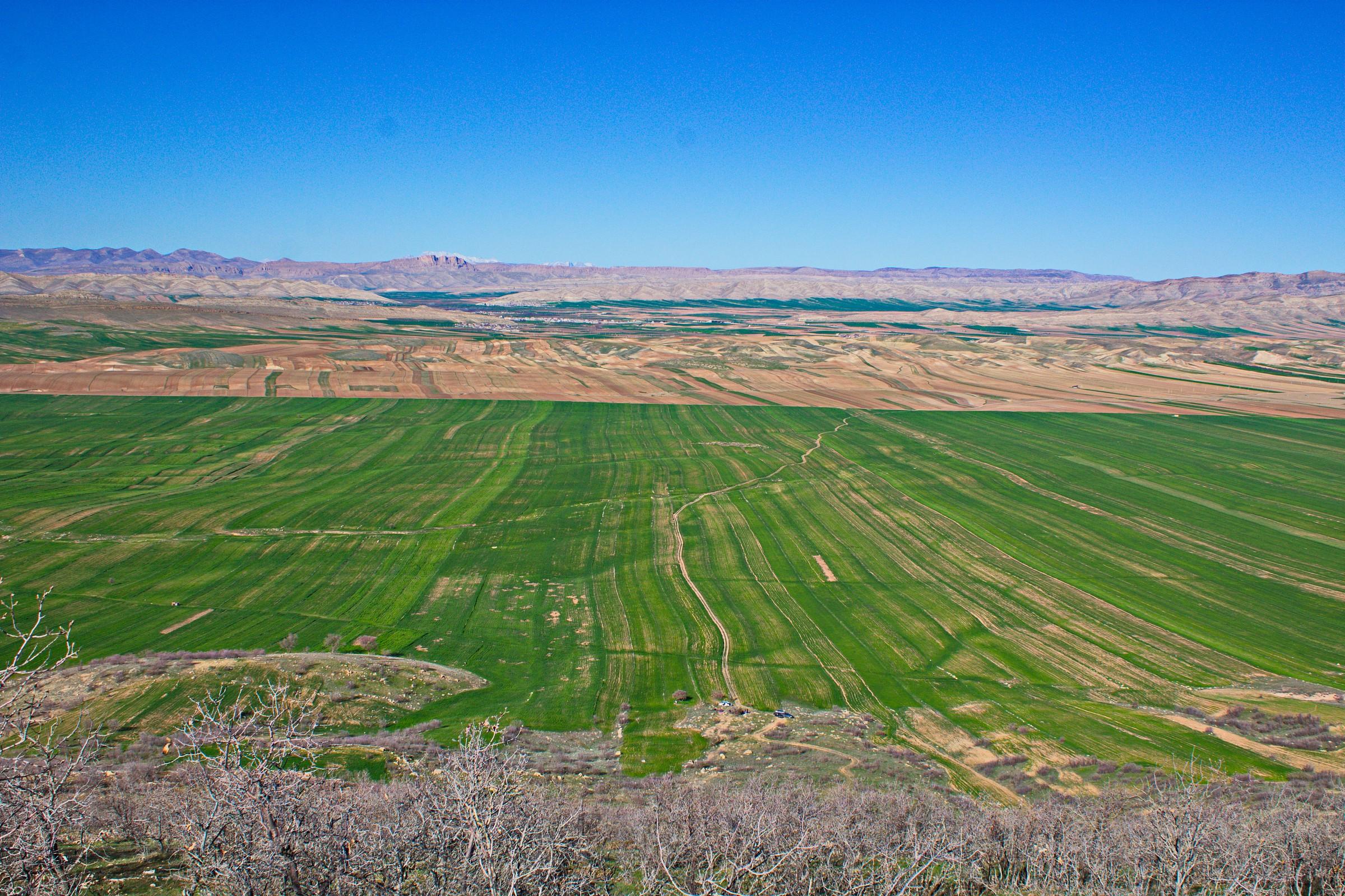 wheat farms...