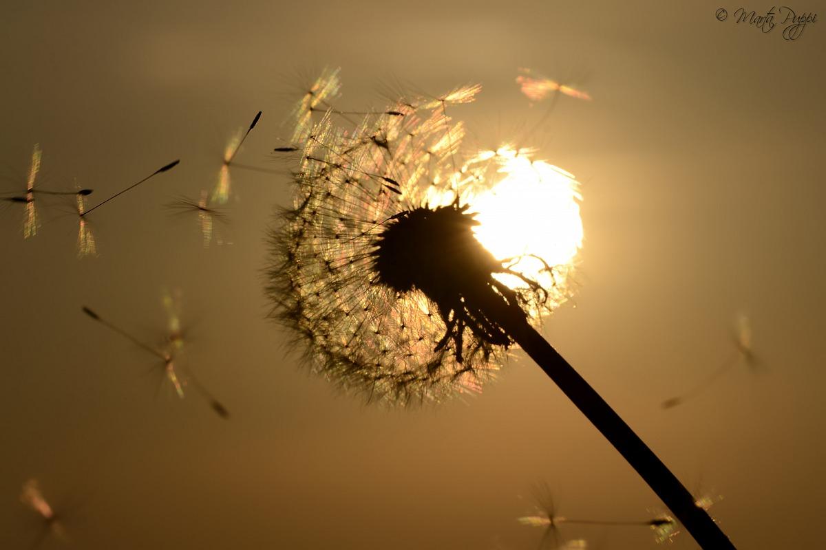 Lightness...