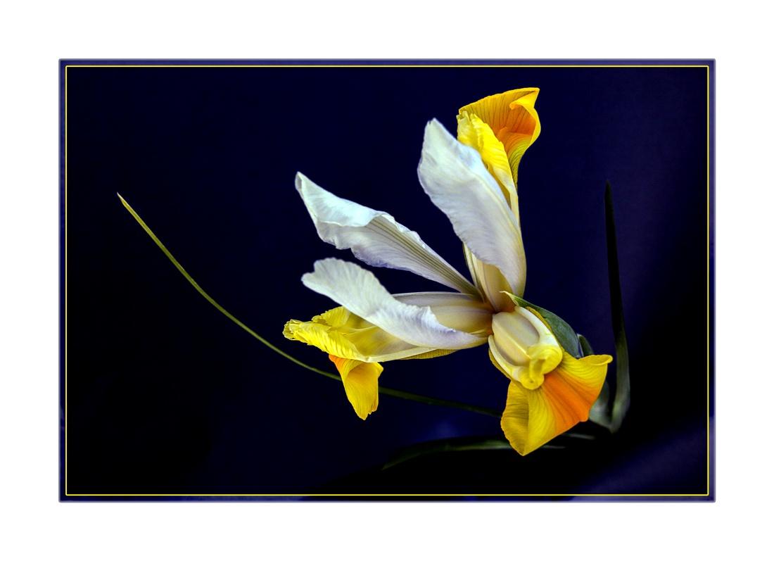 Blossomed...