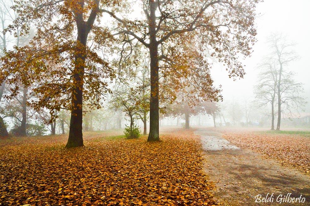 Un giorno di nebbia...