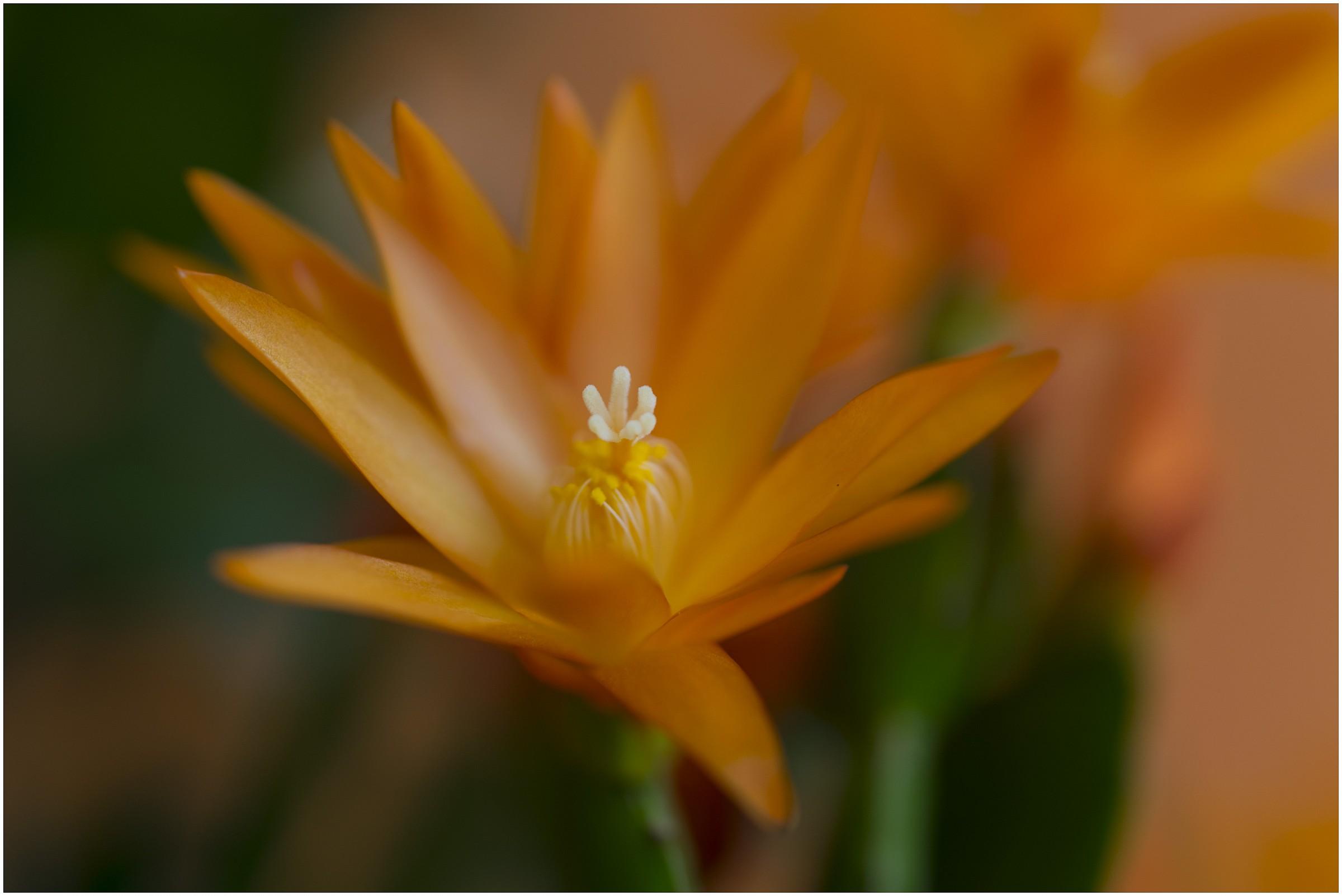 Flower 2...