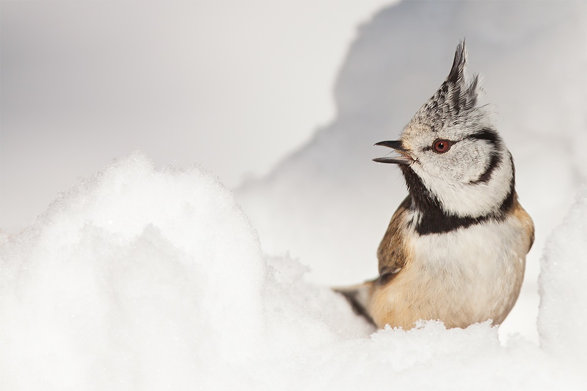 In the snow!...