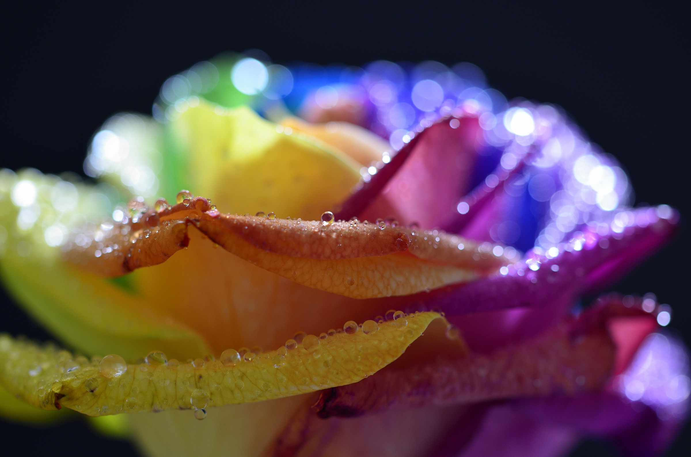 Pink rainbow....