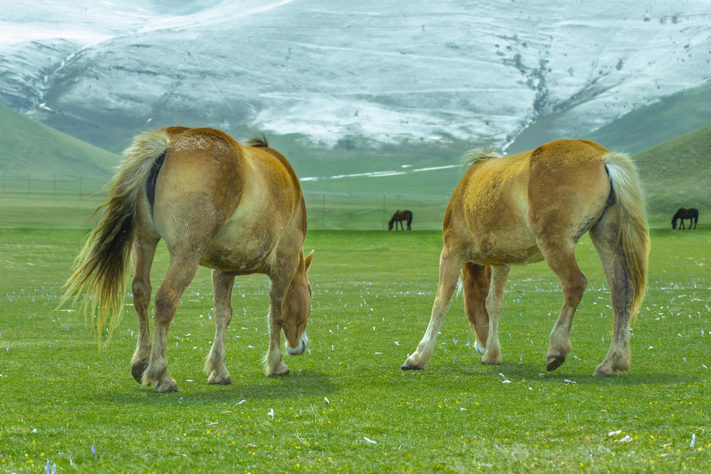 Pastures in Castelluccio...